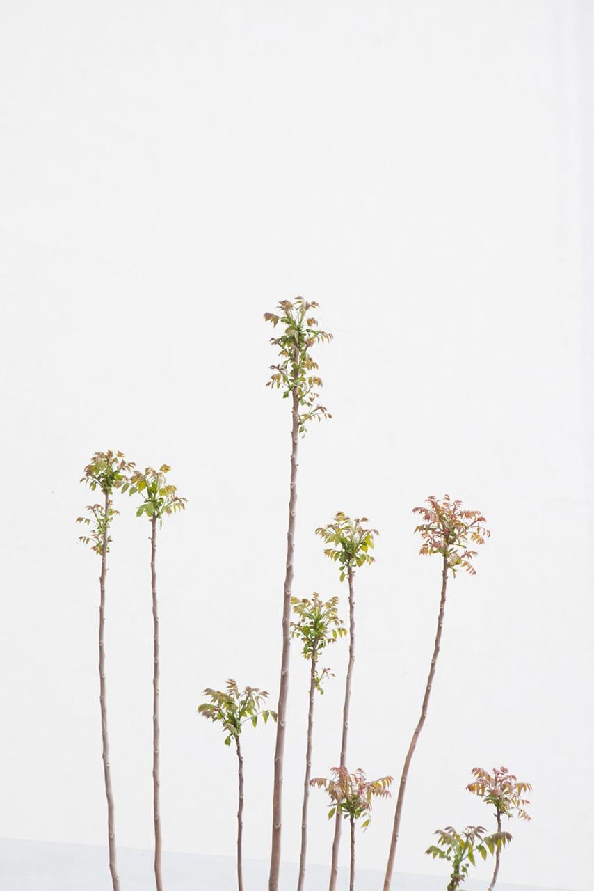 Julian Mullan, Die Stadt, Junge Bäume